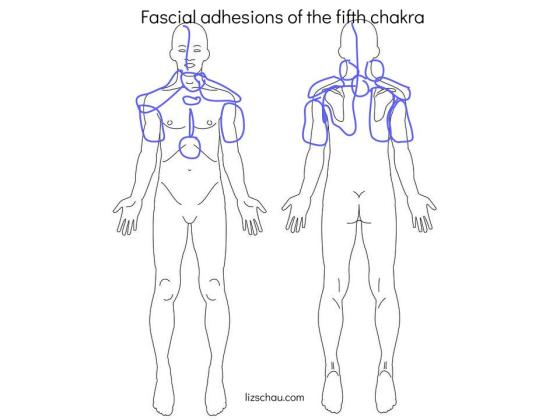 fascial adhesions of the fifth chakra (2)