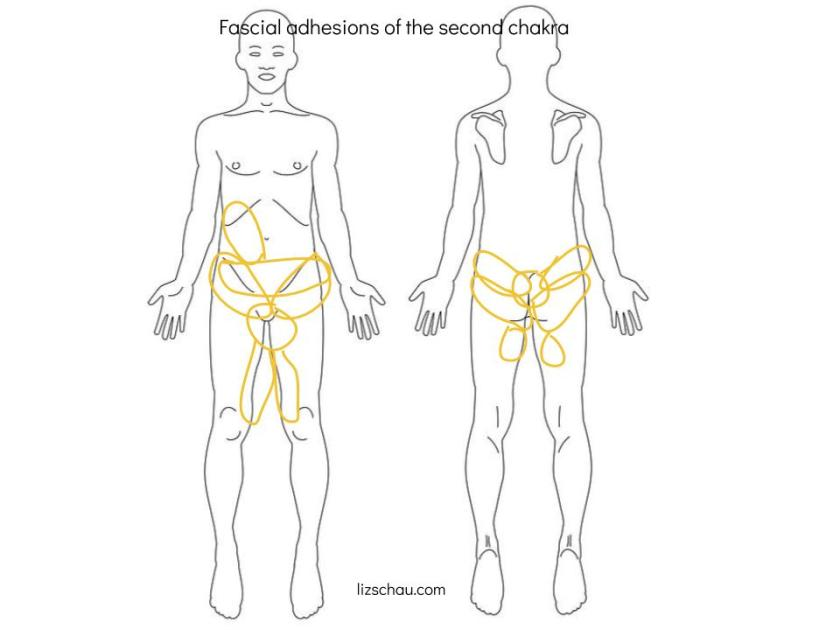 fascial adhesions of the second chakra